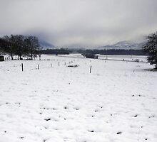 Snow near the Cemetery by Caroline Telfer