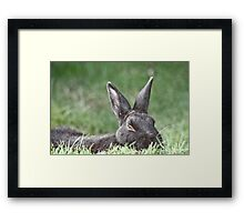 Bunny In The Grass Framed Print