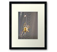 Web Spinning (4) Framed Print