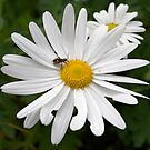 Bugs and Daisies by James Troi