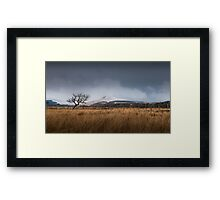 Bare tree on the Brecon Beacons Framed Print