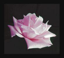 Pink Rose  by ljm000