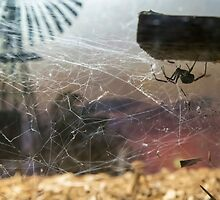 Redback Outback by Nick Sage