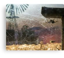 Redback Outback Canvas Print