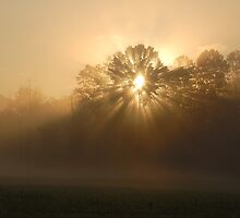 sunrise thru the trees by dc witmer