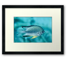 Scaley Framed Print