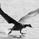 Running on Water by Jennifer Darrow