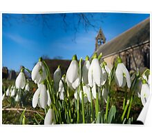 Snowdrops in the church Poster