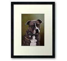 Stafforshire bull terrier 1 Framed Print