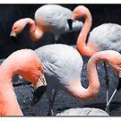 Flamingos by Nikki Collier