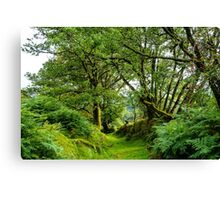 Bower Canvas Print
