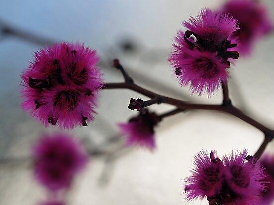 Silken by Jo  Young