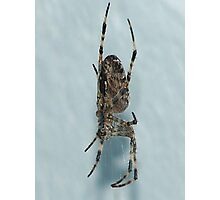 Downward Spider Photographic Print