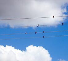 Birds on a Wire by Gudrun Eckleben