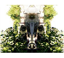 Northcote Community Gardens Fantasy 1 (the old lady of the garden) Photographic Print