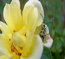 Hanging Out On A Petal by Jonice