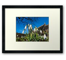 Snowdrops in the English church Framed Print