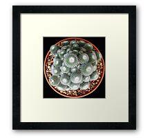 Mammillaria bombycina Framed Print