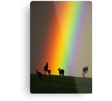 Kangaroos and Rainbow at Kangaroo Ground, Yarra Valley. Metal Print