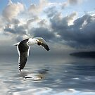Dominican Gull 2 by Ken Wright