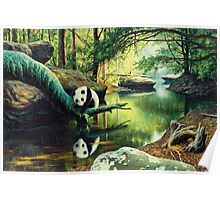 Panda Stream  Poster