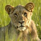 Pride Successor  by Leon Rossouw