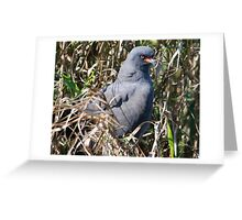Snail Kite Greeting Card
