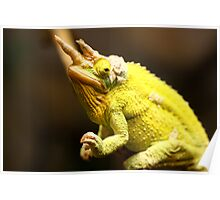 Tai Chi Chameleon Poster