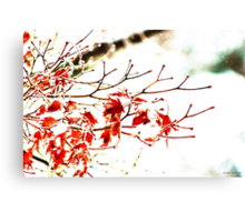 Snowy Maple Abstract Canvas Print