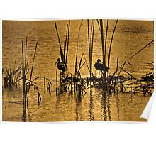 Wading Birds Poster