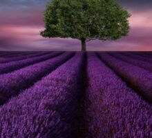 The lavender field  Sticker