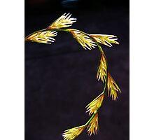 Beautiful stalk Photographic Print
