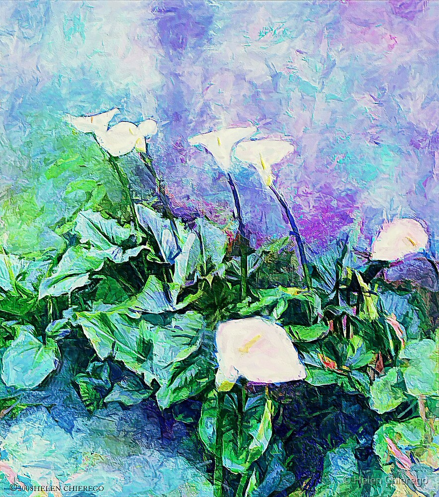 Lillies by © Helen Chierego