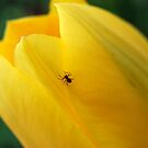 Incy Wincy Spider by Natalie Cooper