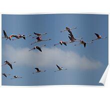 Flying Flamingos Poster