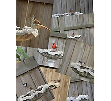 Birdbath Visitors Photographic Print