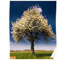 Bright blossoming tree in spring. Poster