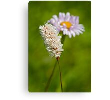 Bottle Brush and Mountain Daisy Canvas Print