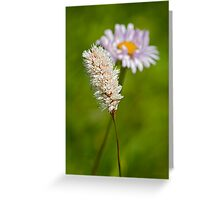 Bottle Brush and Mountain Daisy Greeting Card