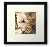 Tulin A Portrait  of a Special k9 Framed Print