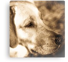 Tulin A Portrait  of a Special k9 Canvas Print