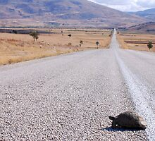 Slow Mover by travellingtwo