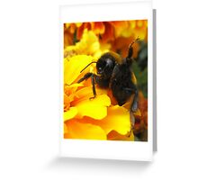 Hi Honey! Greeting Card