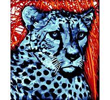 Cheetah artwork Photographic Print
