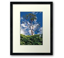 Sky Limbs Framed Print