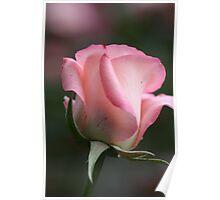 Pink Bud~belami~ Poster