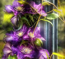 Clematis by Mike  Savad