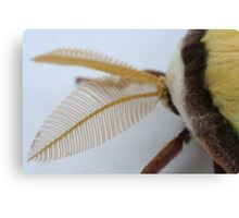 Imagine the reception with those antennae Canvas Print