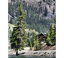 Crooked Fir  Photographic Print