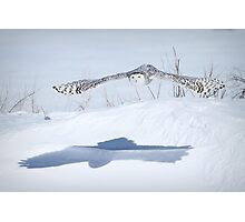 The silent hunter Photographic Print